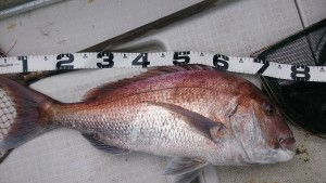 ⑳鯛ラバ2014.10.31