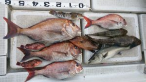 ㉗鯛ラバ2015.5.1