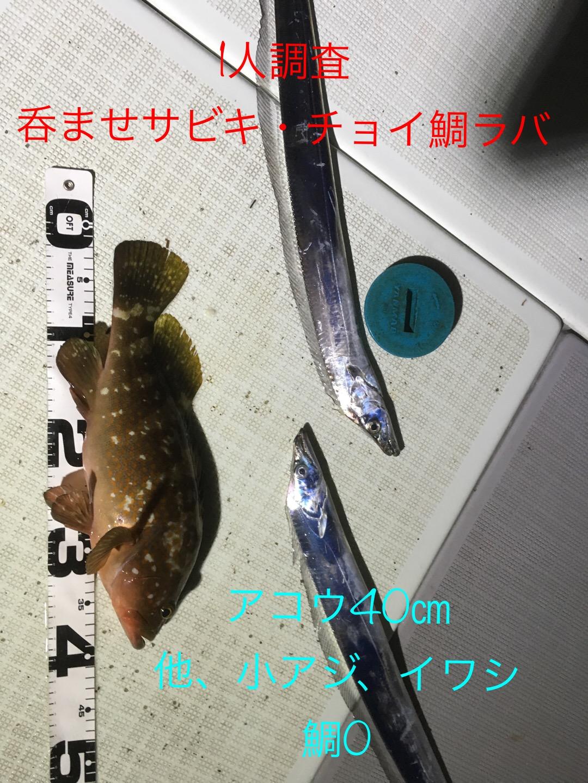 2016年9月23日/鯛ラバ、サビキ呑ませ/調査釣行