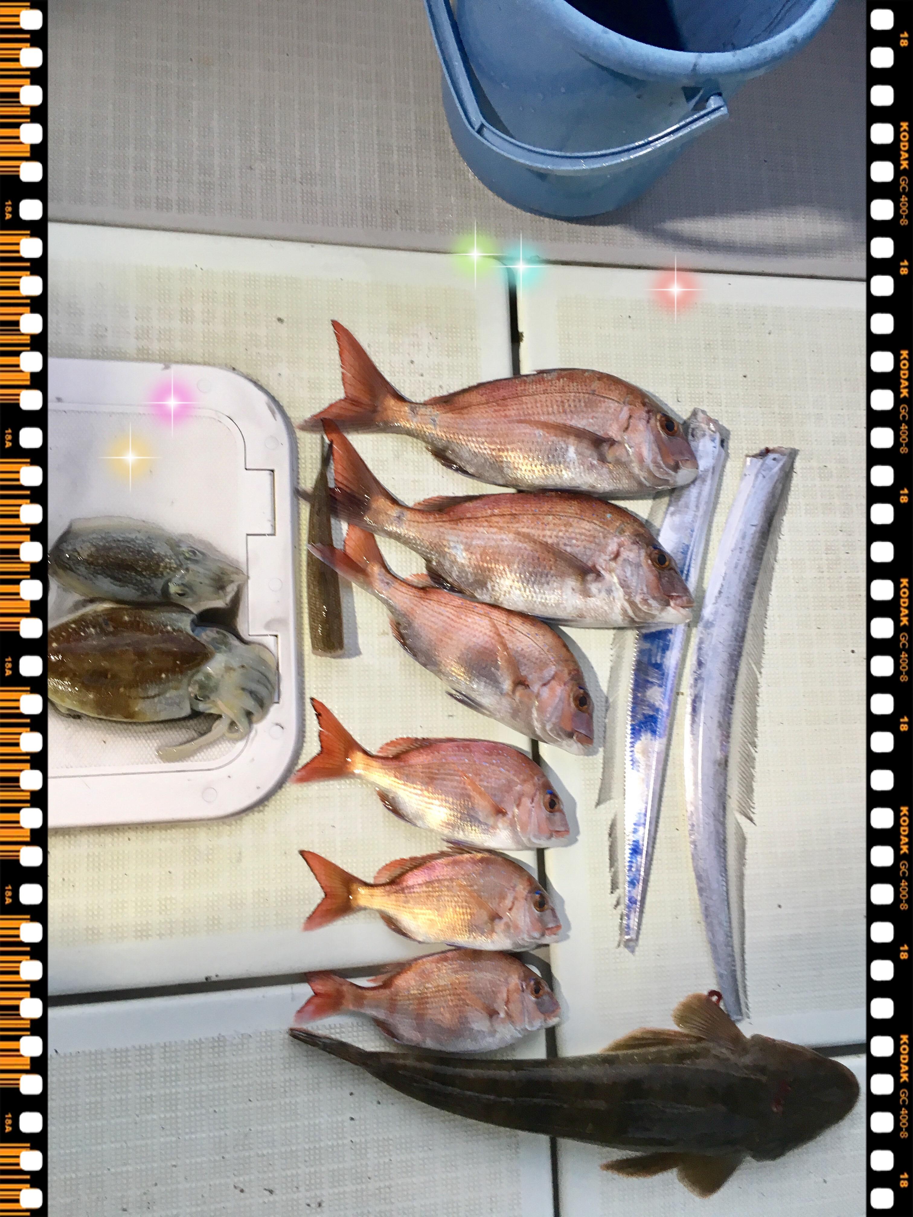 2016年11月16日鯛ラバ釣果